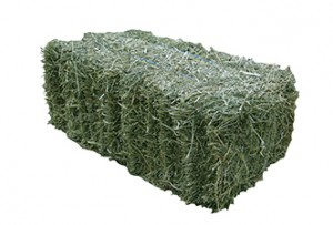 hay bale picture1